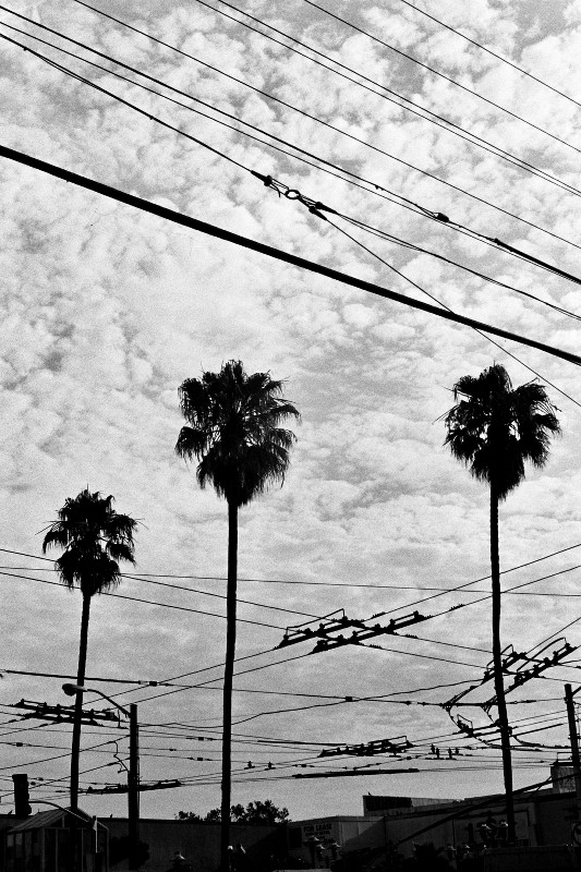 Palms and power lines