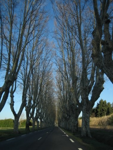 Tree lined roads on the way to Pertuis