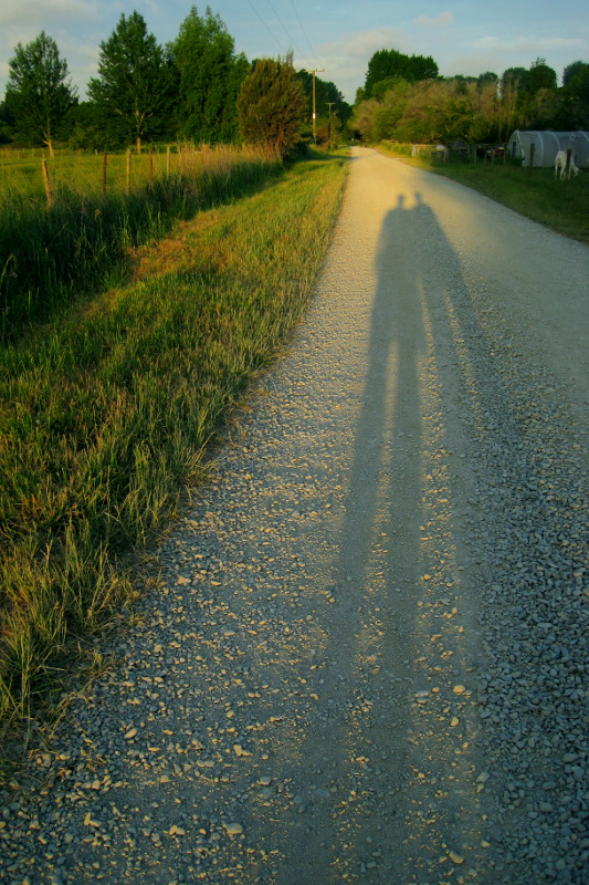 Long shadows cast along a dirt road on a farm in Upper Moutere, New Zealand