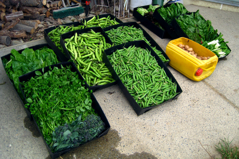 Vegetables from a farm in Upper Moutere, New Zealand, harvested for the farmers market