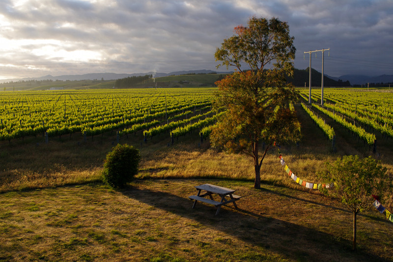 View from our bedroom on a vineyard in the Marlborough region of New Zealand
